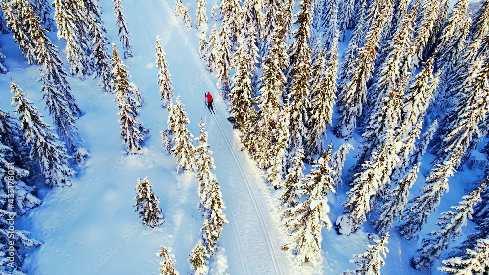 An aerial shot of a cross country skiier in Wisconsin in snowcapped trees.